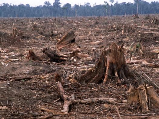 Madagaskarin tuhottu sademetsä